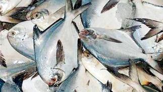 ജൂൺ ഒന്ന് മുതൽ കുവൈത്തിൽ മത്സ്യ ബന്ധന വിലക്ക്; 45 ദിവസത്തേക്ക് വിലക്ക് ഏർപ്പെടുത്തിയത് ആവോലി പിടിക്കുന്നത്