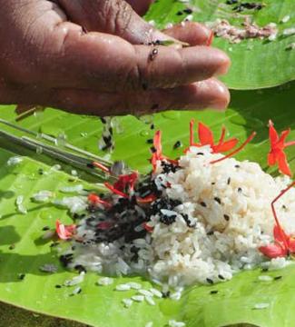 മാതാ അമൃതാനന്ദമയി സേവാ സമിതിയുടെ ആഭിമുഖ്യത്തി പിതൃദർപണം 31 ന്; രജിസ്ട്രേഷൻ തുടങ്ങി