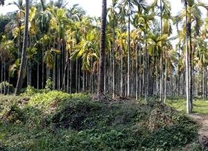 മംഗലാപുരത്ത് 25 ഏക്കർ സ്ഥലവും വീടും വില്പനയ്ക്ക്