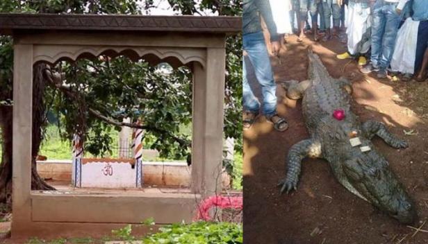 മുതല ക്ഷേത്രം പണിപൂർത്തിയാകും മുന്നേ പ്രാർത്ഥനക്കായി വിശ്വാസികൾ എത്തിത്തുടങ്ങി; 130 വയസ്സുണ്ടായിരുന്ന ഗംഗാറാം എന്ന മുതല വിശുദ്ധ ആത്മാവായിരുന്നു എന്ന് ഗ്രാമവാസികൾ