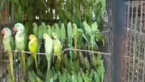 കള്ളക്കടത്ത് സംഘത്തിൽ നിന്നും കണ്ടെത്തിയത് 524 തത്തകളെ; അന്തർസംസ്ഥാന സംഘത്തിലെ കണ്ണികളെ പിടികൂടിയത് ബംഗാൾ പൊലീസ്