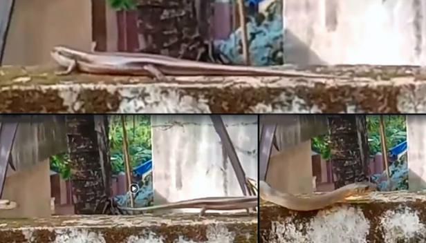 അമ്മച്ചീ... അമ്മച്ചീ.. പാമ്പ്; പേടിച്ച് അലറി കരഞ്ഞ് മകനും കൂളായി മകനെ സാന്ത്വനിപ്പിച്ച് അമ്മച്ചിയും: വീഡിയോ വൈറൽ