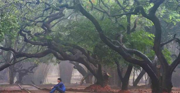 മരങ്ങൾക്കും പെൻഷൻ നൽകാനൊരുങ്ങി ഹരിയാന; പ്രതിവർഷം ഉടമയ്ക്ക് ലഭിക്കുക 2500 രൂപ; പദ്ധതി നടപ്പാക്കുക 'പ്രാണവായു ദേവത പെൻഷൻ പദ്ധതി' എന്ന പേരിൽ